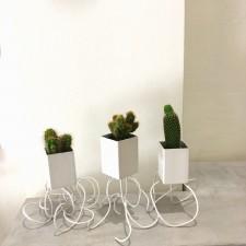 pot dancing cactus